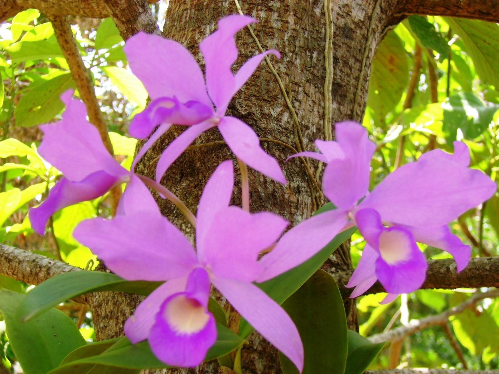 Fotos De Tatuagens De Flores-Orquideas - Poliana Abritta conta que fez tatuagem de orquídea na