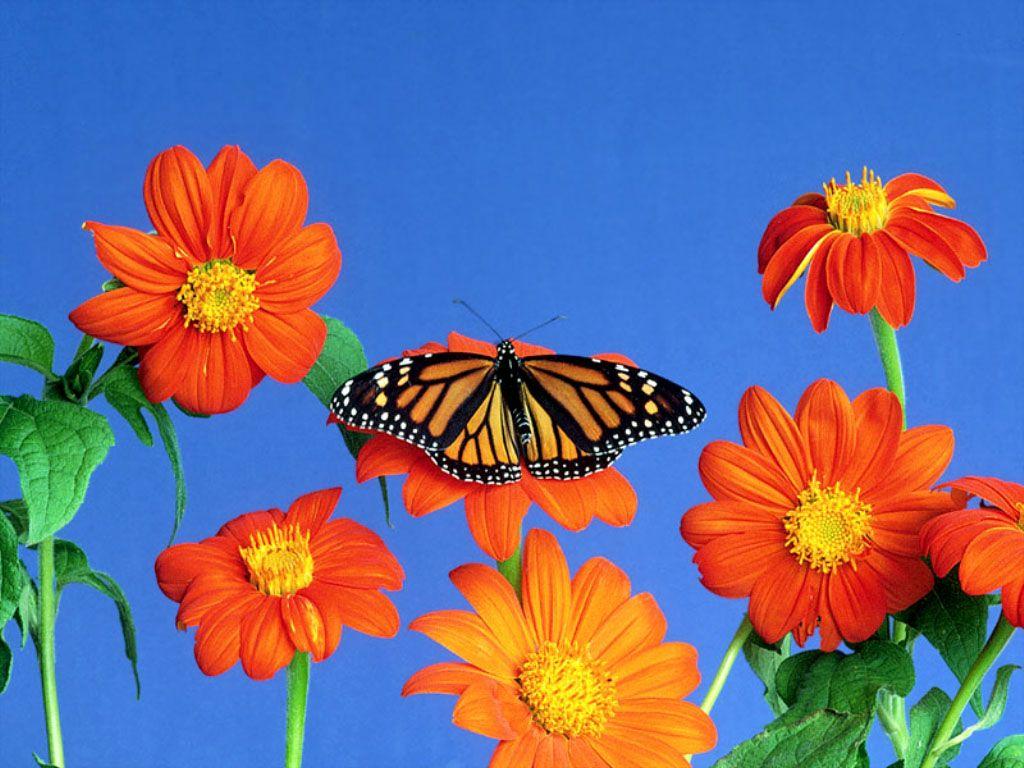 http://2.bp.blogspot.com/-k6RN243DaYA/UANzQSIOxPI/AAAAAAAAEVo/cI3IOzlPP8Q/s1600/Desktop-Wallpapers-2.jpg