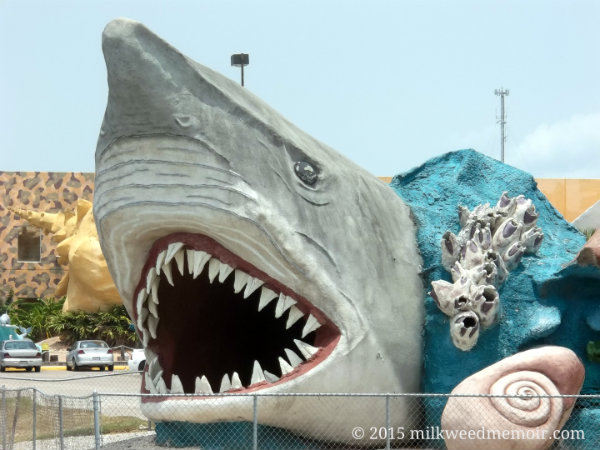 Great White Shark sculpture in front of Bobz World, Los Fresnos, Texas