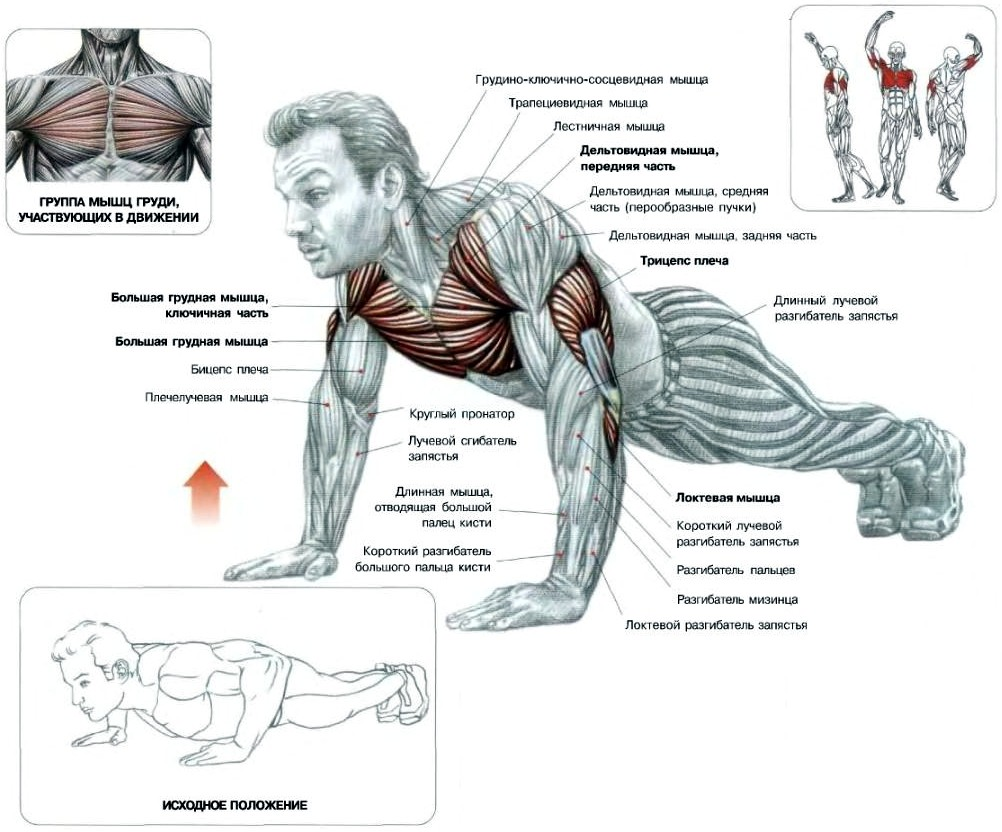 Сводя тренировка мышц ануса хотел