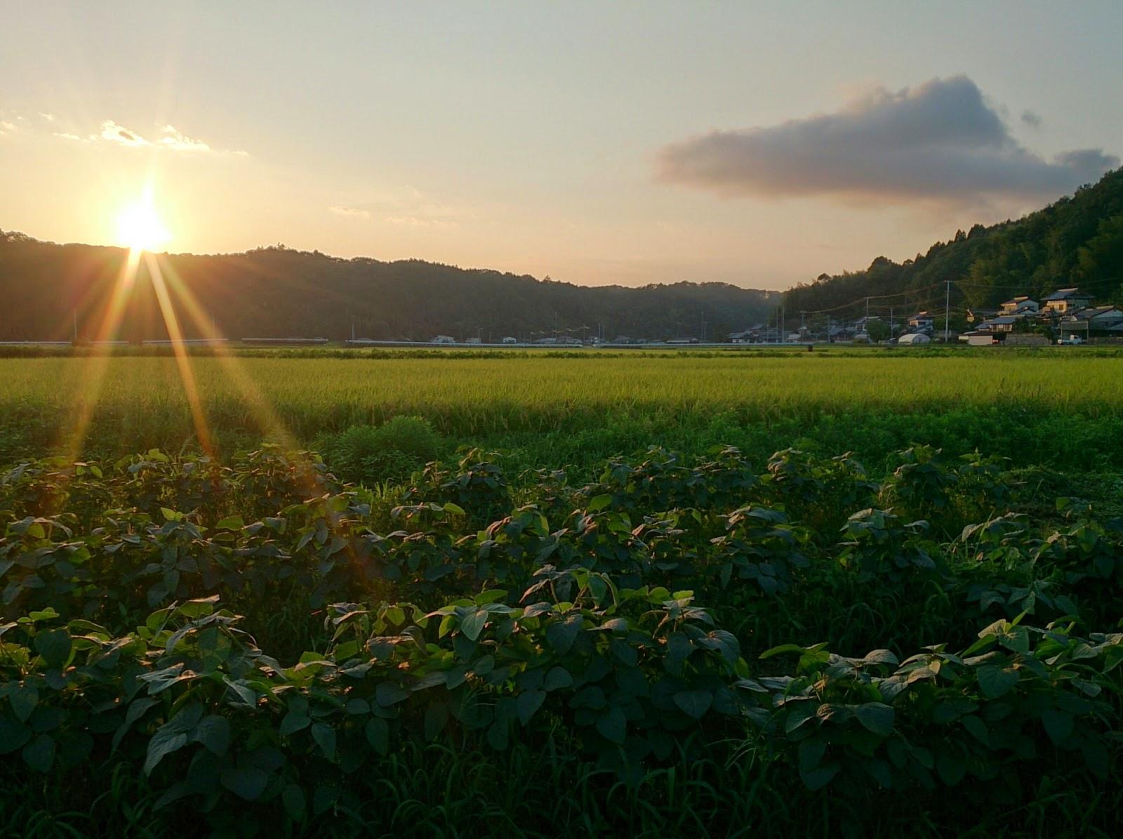 畑から見た夕日