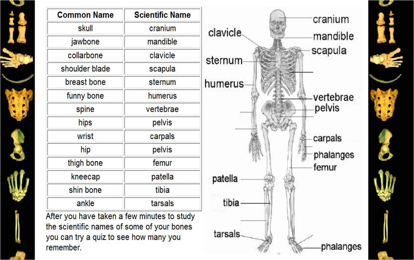 English Edublog Insal Ahuachapn The Human Body