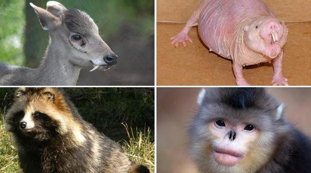15 impresionantes animales