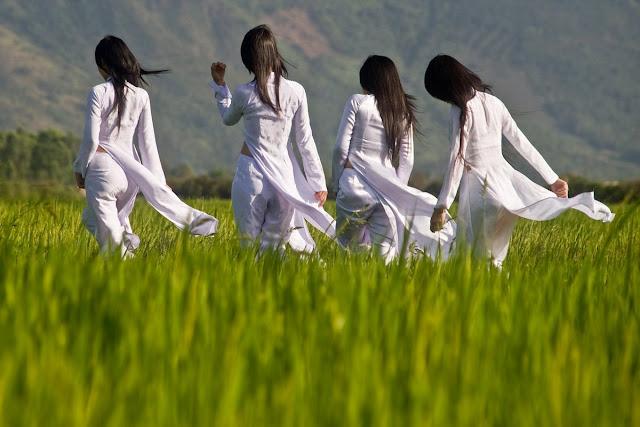 Vietnamese girls walking through rice fields