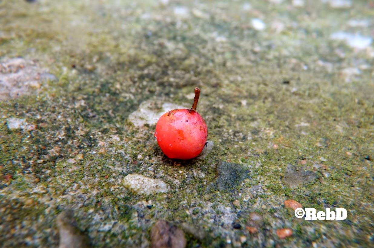 Ett ensamt rönnbär på cement foto: Reb Dutius