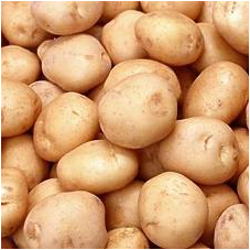 KENTANG (Solanum tuberosum L.) Part 2