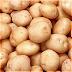 KENTANG (Solanum tuberosum L.) Part 2