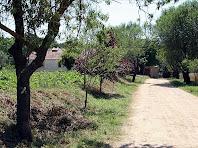 Camí d'entrada a Can Plandolit. Autor: Carlos Albacete