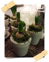 Betongkruka med hyacinter