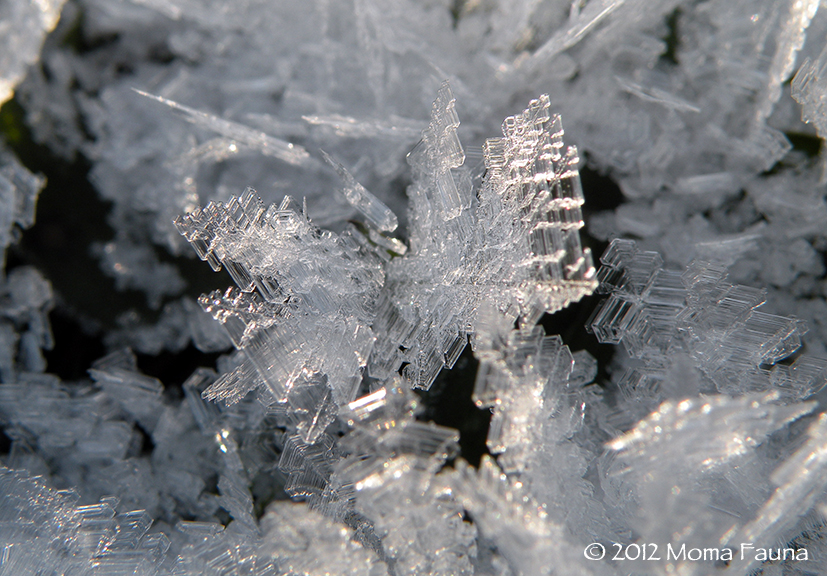 Frost: Sacred Geometry