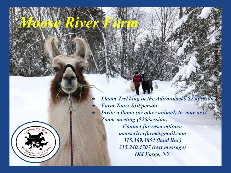Invite an Animal Guest!