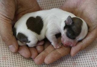 Chó sơ sinh