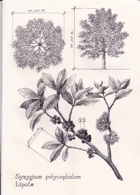1000  images about Plant Sketches on Pinterest | Sketchbooks ...