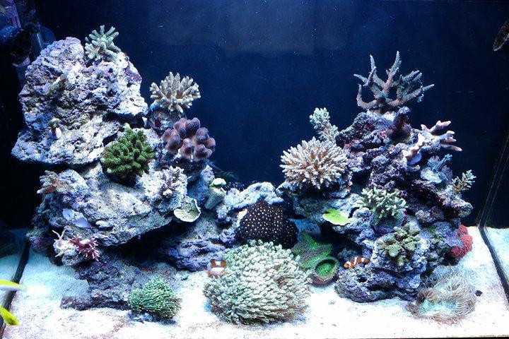 Astratoneti reef presentaci n de mi acuario marino de for Acuario 90 litros