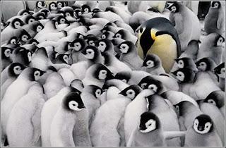 Pingüinos en manada