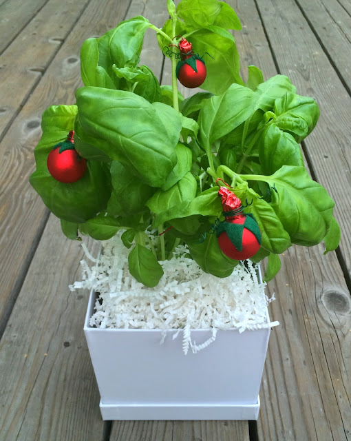 Christmas Pizza Party - Basil Centerpiece with Cherry Tomato Ornaments | www.jacolynmurphy.com