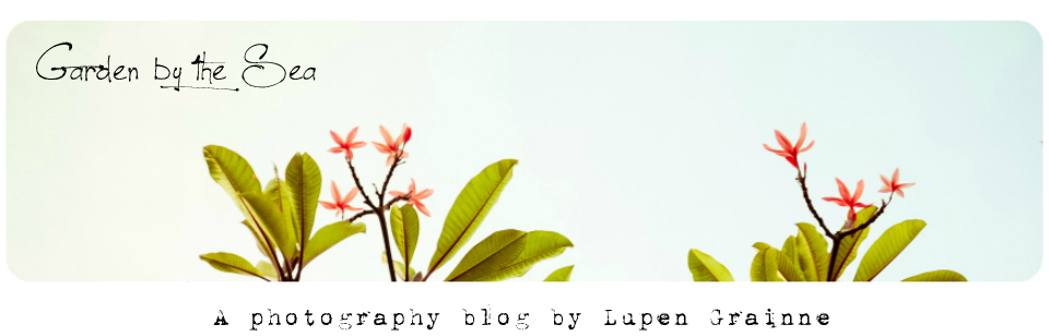 Garden by the sea - Fine Art Photography blog by Lupen Grainne