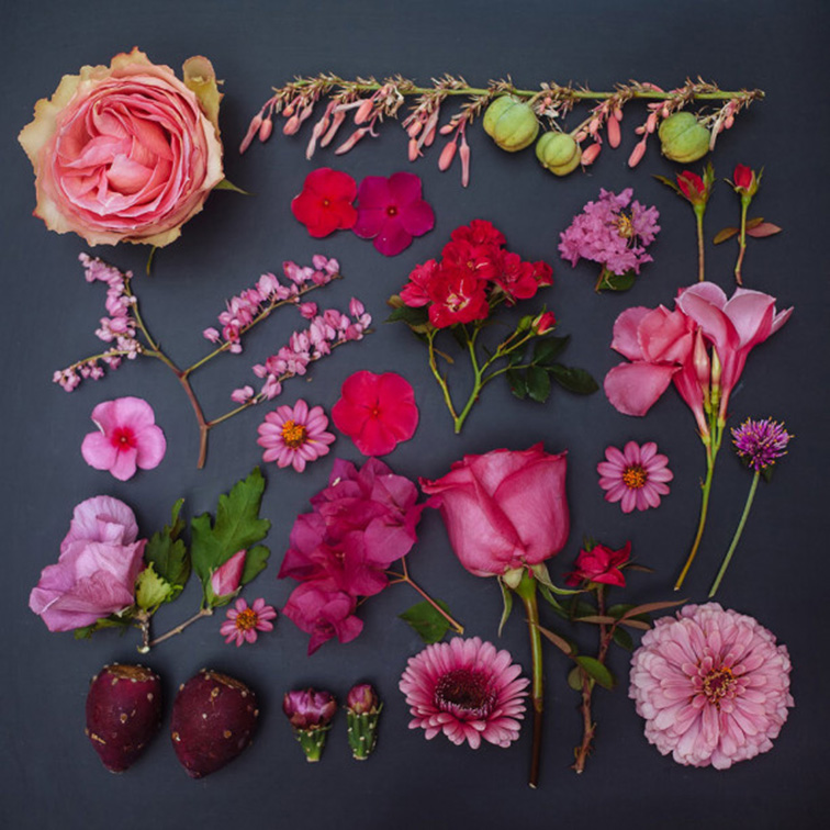 Floral spread, pink flowers by Emily Blincoe