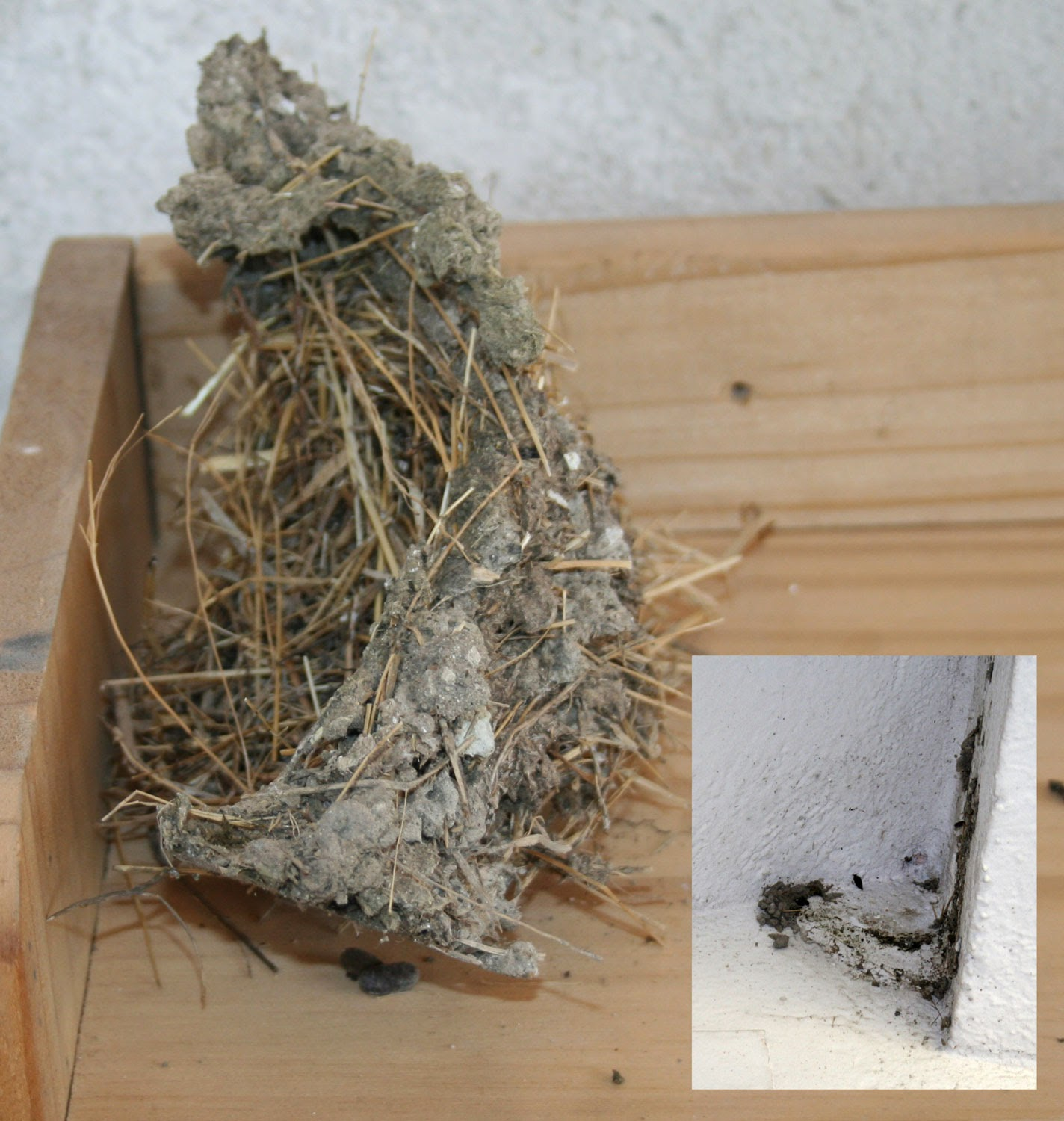 Old nest and nesting point