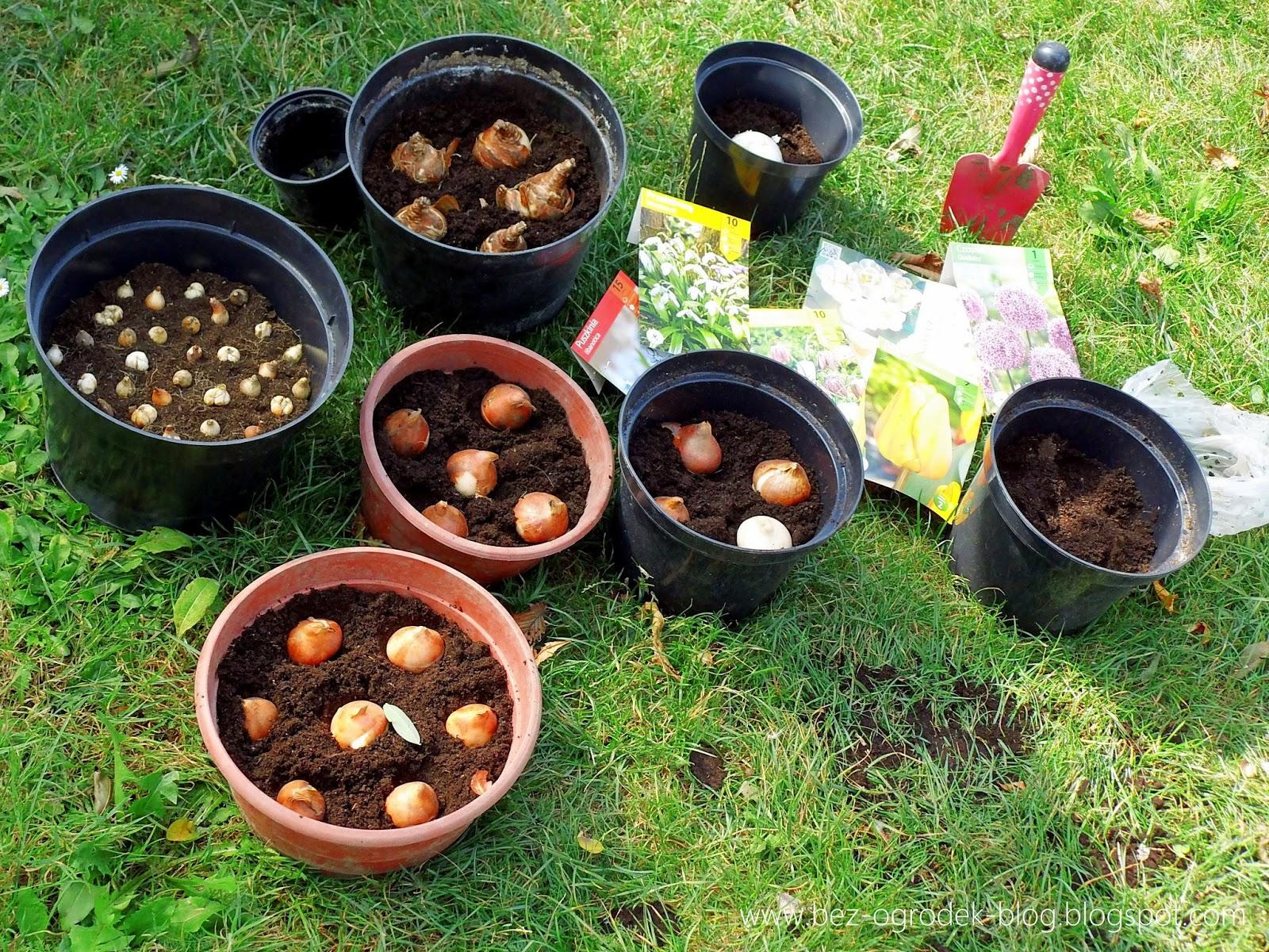 Poradnik Ogrodniczy Wrzesień W Ogrodzie Bez Ogródek Blog Ogrodniczy