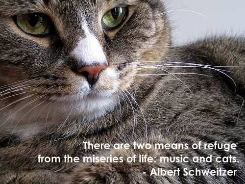 Cat Quote Images - Present Outlook