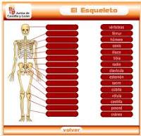 Juego el esqueleto.