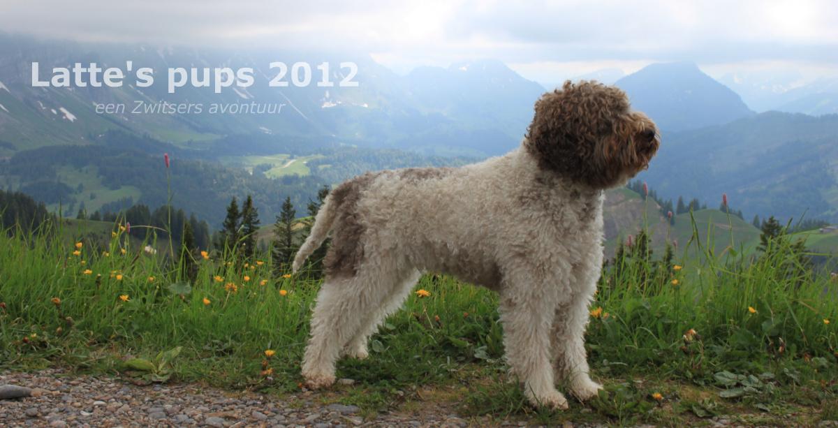 Latte's pups 2012