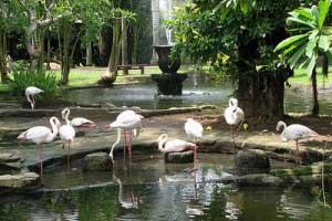 Objek Pariwisata Bali Bird Park - exnim.com