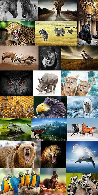 http://2.bp.blogspot.com/-kB36D7xDqAg/VOmCQ_GkGkI/AAAAAAAAAM0/rkaNj18cNBA/s1600/1413783960_wild.animals.set.stock.png