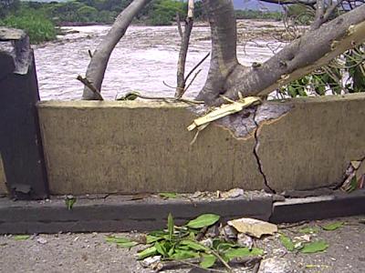 Árbol contra el puente internacional Simón Bolívar «NOTISAN!»