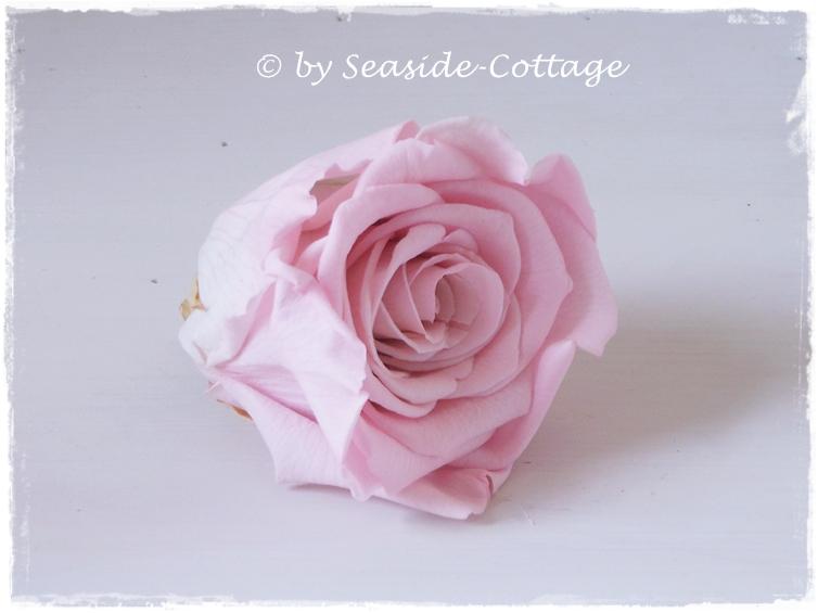seaside cottage gefriergetrocknete rosen. Black Bedroom Furniture Sets. Home Design Ideas