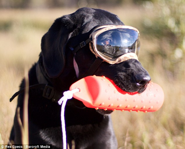 Dog Eye Protection After Surgery
