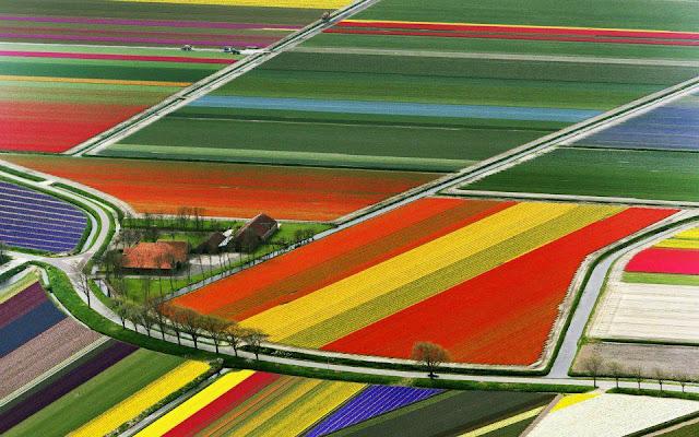 577052 275307349233314 1229196102 n شهر مايو في هولندا  موسم حصاد زهور التوليب  جنة على الأرض