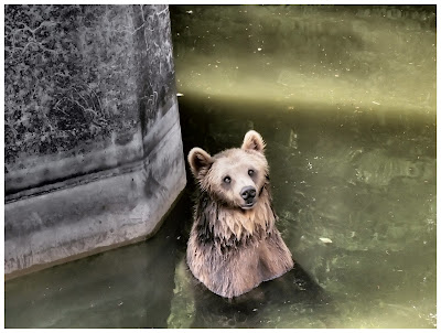 In Warsaw zoo on summer 2012