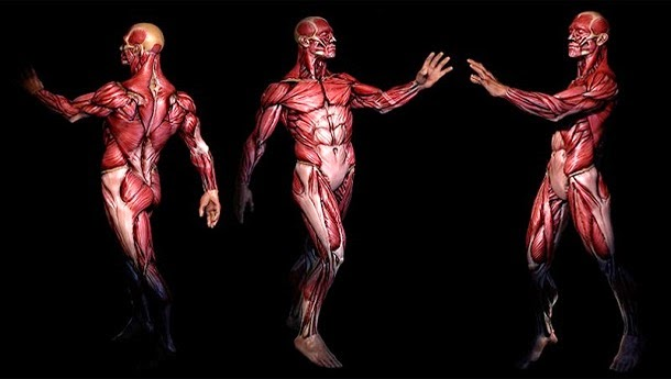 Pesquisadores criaram Google Maps do corpo humano