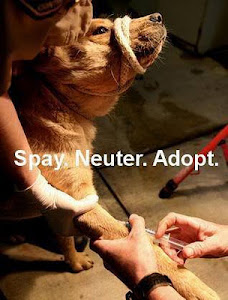 Spay. Neuter. Adopt.