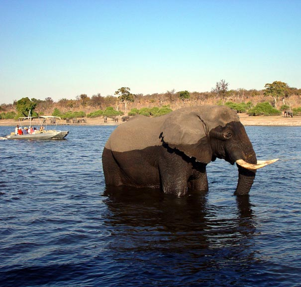 Chobe Safari Lodge Botswana