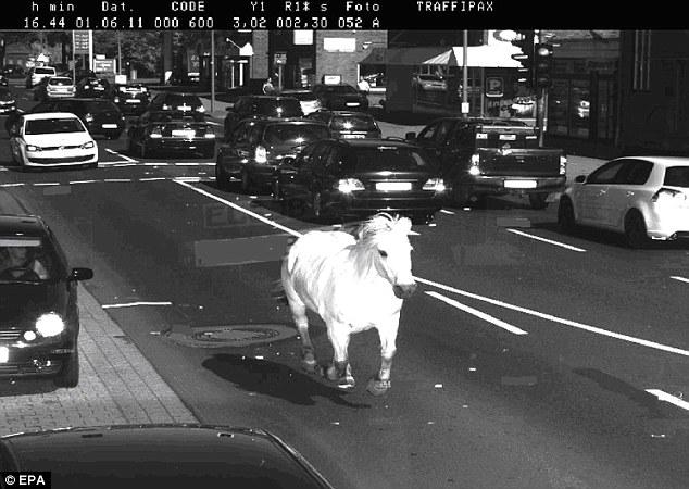 Karena Ngebut, Kuda Ini Tertangkap Kamera Pangukur Kecepatan Kendaraan -- foto bugil telanjang bulat -- faceleakz
