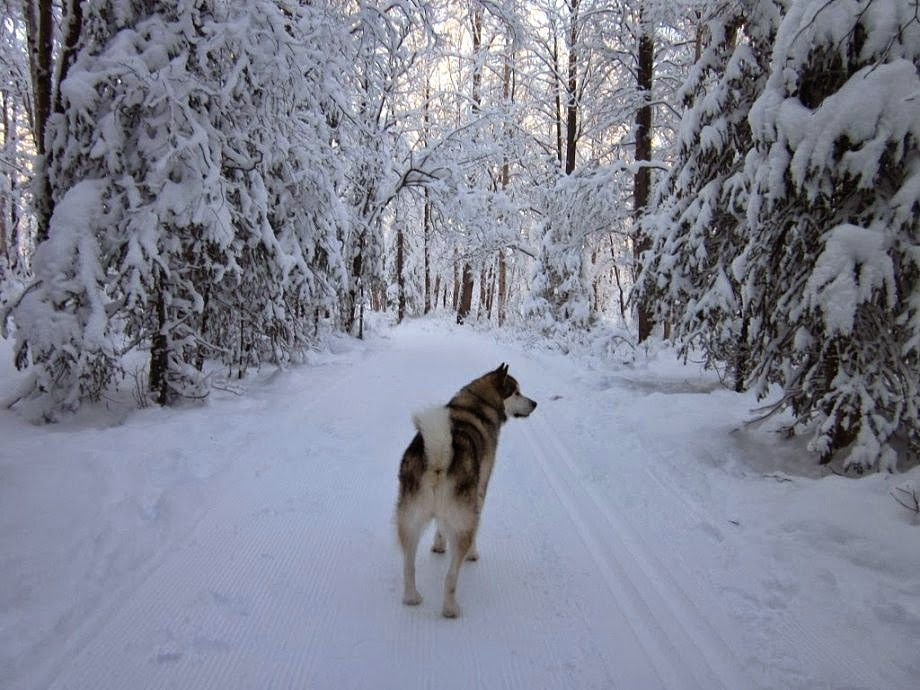 Macera Yürüyüşü, Anchorage, Alaska