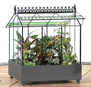 Terrariums U2013 The Wardian Case Terrarium