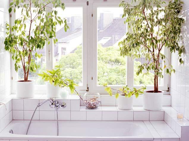 La fabrique d co des plantes dans la salle de bain for Sticker fenetre salle de bain