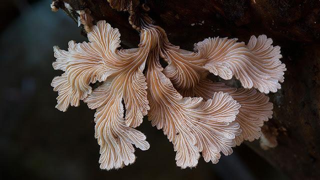 Fotógrafo registra os fungos mais obscuros do mundo