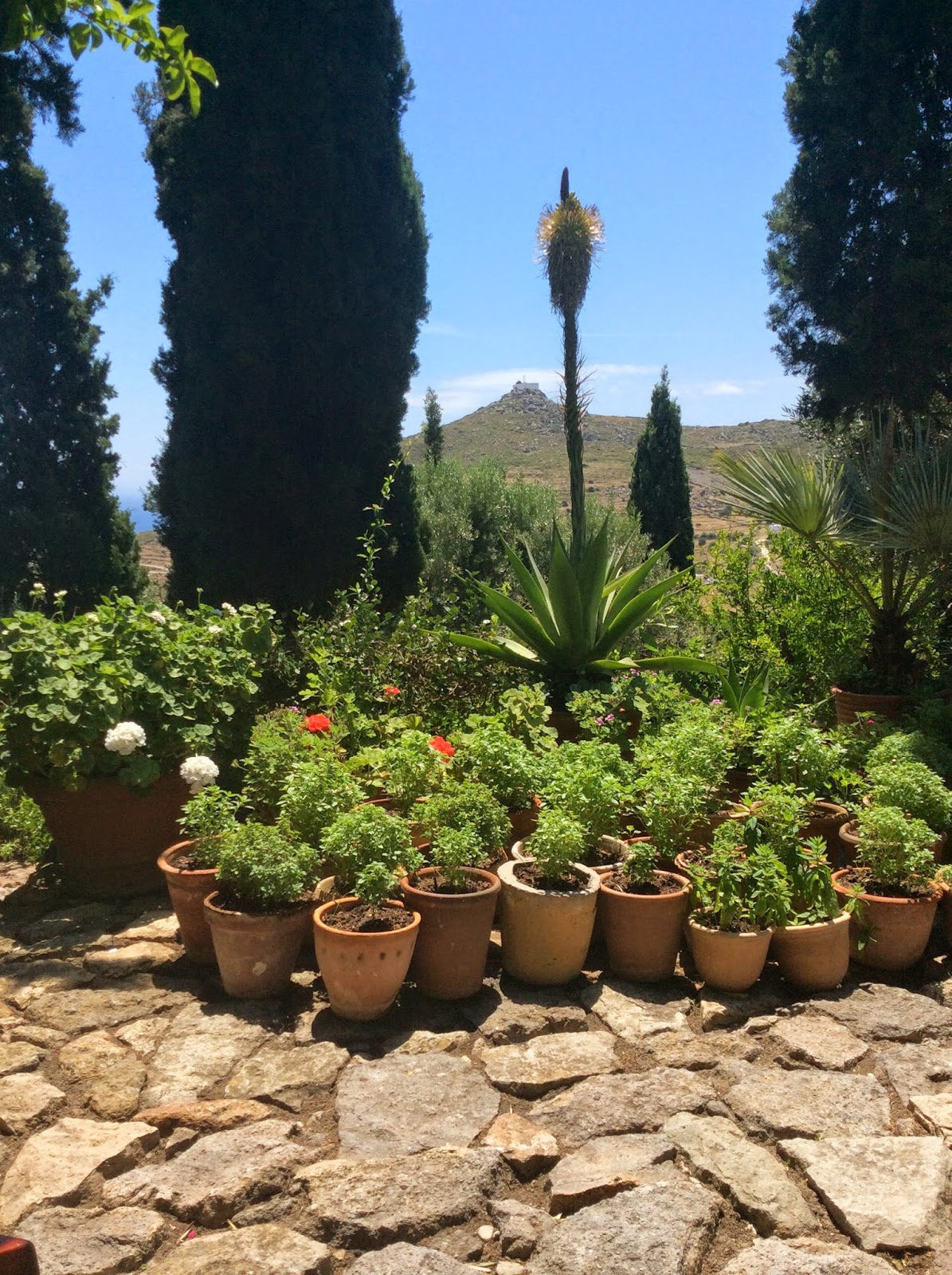 Recent Post -  Patmos Garden