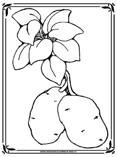 gambar kentang untuk mewarnai
