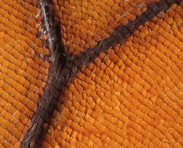 Increíbles imágenes de bacterias y tejidos
