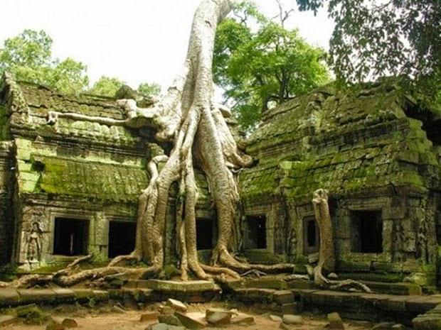 Pohon Paling Unik