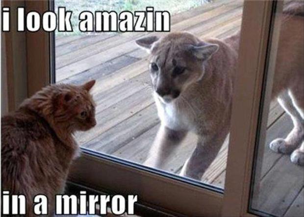 The 70 Funniest Animal Memes  indulgycom