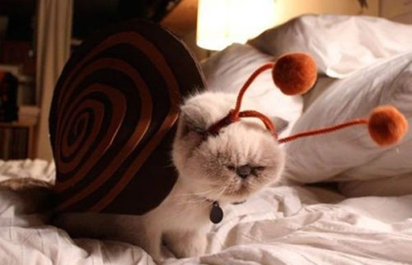 50 Funny pet costumes (50 pics)  Amazing Creatures