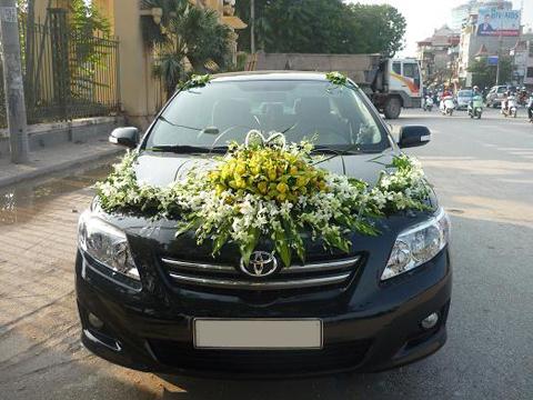 Xe cưới Toyota Altis