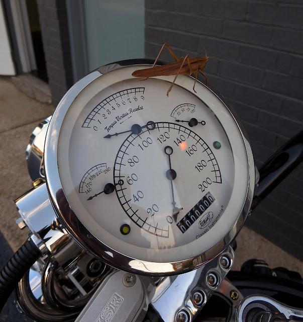Bienville Legacy Motorcycle Dash